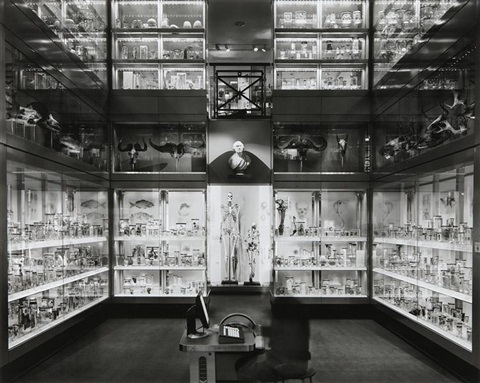 crystal palace hunterian museum london september 25 by matthew pillsbury