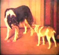 les deux chiens by alice leotard
