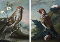 chardonneret et linotte mélodieuse (pair) by johann adalbert angermayer