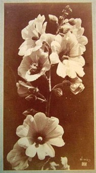 fleurs by charles aubry