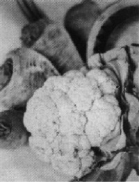still life with cauliflower and parsnips by marie riggins