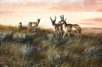 antelope herd by trevor swanson