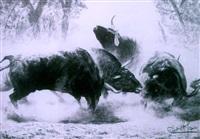 toros en el campo by demetrio sanz
