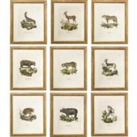 exotic animals (set of 9) by innocente alessandri