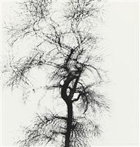 multiple exposure tree by harry callahan
