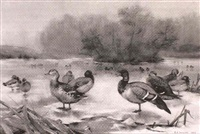 ducks on a frozen lake by e. j. amoore