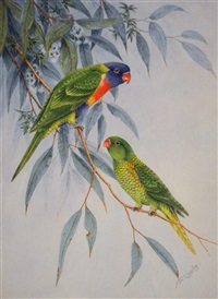 australian rainbow lorikeets by neville william cayley