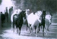 caballos salvajes by demetrio sanz