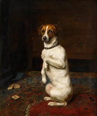 jack russell terrier by mariquita jenny moberly