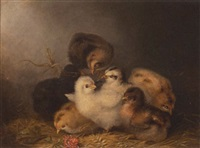 seven chicks by mary russell smith