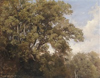 baumwipfeln by julius lange