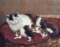 gatti by marino lenci