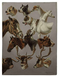 animal studies by charles towne