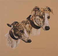 two greyhounds by david (sir) baird
