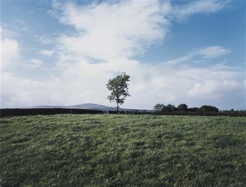 union jack flag in tree country tyrone by paul graham