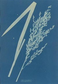 poa aquatica by anna atkins