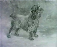 a cocker spaniel by percy gravely