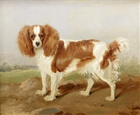 a brown and white spaniel in a landscape by martin theodore ward