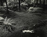 child in forest by wynn bullock