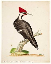 pileated woodpecker by john abbot