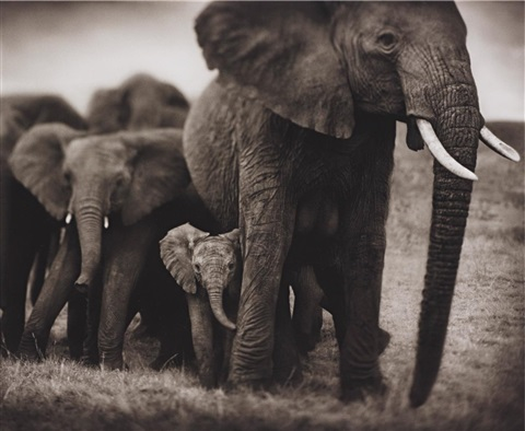 elephant mother and two babies serengeti by nick brandt