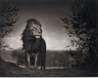 lion before storm i, maasai mara by nick brandt