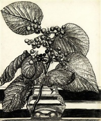 plant study by isabel mclaughlin
