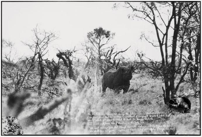 the black rhino in tsavo by peter beard