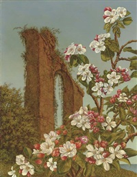 apple blossom - sicily by charles wheedon rain
