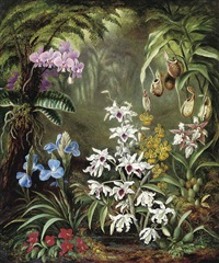 orchids by albert durer lucas