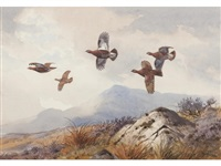 grouse (+ another of partridge; 2 works) by john cyril harrison