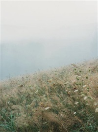 sans titre (from foggy summer meadow) by jitka hanzlová