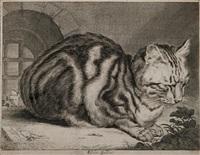 le grand chat by cornelis visscher