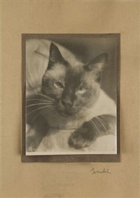chat - prague by josef sudek