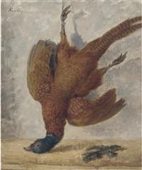 pheasant hanging by kalman kemeny