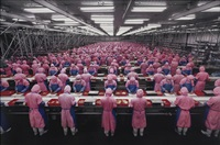 manufacturing #17, deda chicken processing plant, dehui city, jilin provence, china by edward burtynsky