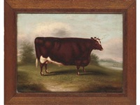 portrait of a prize winning short horned ox in a landscape by william henry davis