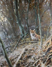 fox in woodland by mick cawston