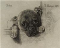 sukey, a pug puppy (study) by anthony frederick augustus sandys