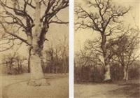 études d'arbres dans la forêt de fontainebleau (2 works) by olympe (count) aguado