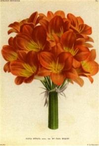 l'illustration horticole, journal spécial des serres et des jardins by charles lemaire