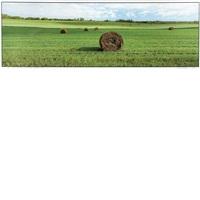 maine township field, minnesota, summer by maxwell mackenzie
