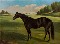 portrait of a horse by thomas j. scott