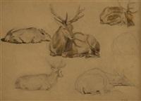 études de cerfs et de biches (study) by jules bertrand gélibert