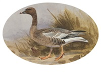 pink footed goose by john cyril harrison