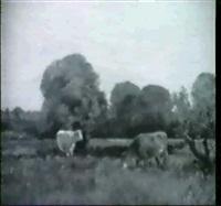 vaches dans un paysage by quinton