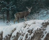 mule deer by robert bateman