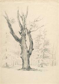 estudio de árboles by maria del rosario weiss