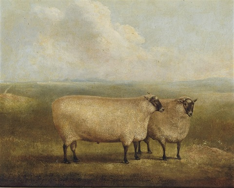 a prize ram bred by mr william sainsbury collab w william henry davis by james of bath loder