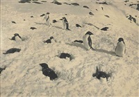 adélie penguins snowed up on their nests; adélie penguin and chicks (2 works) by herbert george ponting